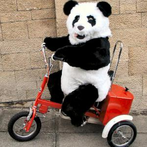 Panda on a Tricycle