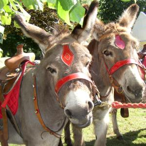 Donkeys for film, television and photography